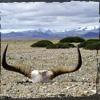 caithion: (Tibet)