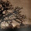evening_spirit: (Tree)