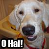 mighty_aphrodite: (Dogs>O Hai!)