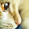 cinnabarheart: (Sundry - Cat)