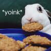 foxriverinmate: (Bunny)