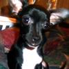 kazbaby: MY BABY!  (Yoda boy2)