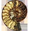 ext_8609: ammonite (ammonite)