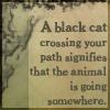 m_cobweb: (black cat)