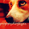 sonicanomaly: (Dogs: puppy eyes)