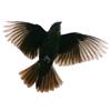 wingedspirit: (Default)
