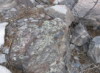 amaebi: (lichen)