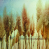 songbird: photograph of the heads of stalks of grain (Default)