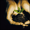 songbird: hands cupped holding dirt from which a small plant is growing (new life)