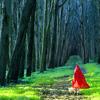 grimm_works: (girl in woods, grimm mod)