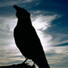 creator_raven: (bird silhouette light)