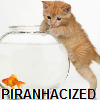 corrvin: kitten climbing a fishbowl with goldfish with the word 'piranhacizer' (piranhacizer)