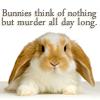 manifestjoy: Bunnies think of murder all day long (critters - bunnies think of murder)
