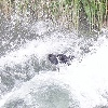 armb: Dog jumping in water (Default)