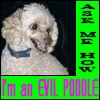 acusa_dora: (Evil Poodle one)