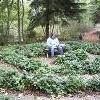anna_copperowl: Anna, sitting in the middle of a shrub labyrinth (Default)