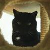 lyorn: (black cat)