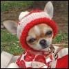 herdivineshadow: (annoyed lookin doggy :D)