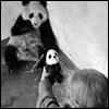 herdivineshadow: (scared panda)