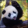 herdivineshadow: (hello panda)