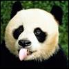herdivineshadow: (panda :P)