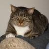 meepodeekin: (squinty cat)