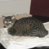 meepodeekin: (crafty cat)