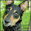 charter_npc: (Disreputable Dog)