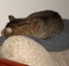 meepodeekin: (sleeping cat)
