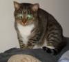 meepodeekin: (glare cat)