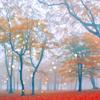 sepiastars: ([stock] autumn lights)