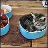 silverthorne: A Kitten sleeping in a fruit bowl (Kitten Inna Bowl)