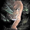 silverthorne: Painting of a cougar sneaking through underbrush (Default)