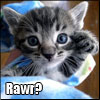 dchan: photo of a grey kitten. text: rawr? (cute lolcat)