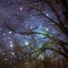 ohmyfurandwhiskers: (starry-like)