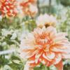 sepiastars: ([stock] pink flowers)