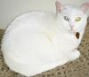 gwynnbochanan: (Cat)