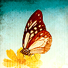 plumgirl: (Butterfly)