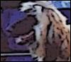 scarebear: (Chloe, Afghan Hound)
