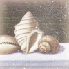 duskpeterson: (summer night shells)