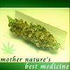 cannabis: (medical marijuana)