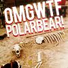 maidenjedi: (polar bear)