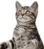 ayngelcat: (Kitty)