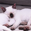 deadlydoctor: (Virus - cat - U are boring go away)