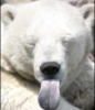 evaelisabeth: (Bear)