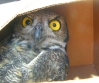 narrativian: annoyed owl (F: ORLY 1)