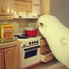 linds: Bird Cooking (Bird Cooking)