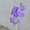 hennes: Lavender (Default)