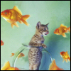 ladyvox: kitten in a fishbowl, surrounded by goldfishies who are swimming around outside the fishbowl (kat&visjes)