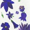 rivenwanderer: flowers (flowers)